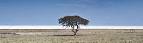 landscape image of solitary acacia tree with the Kalahari Desert beyond